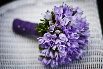 fiori viola