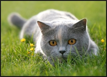 gatto nell'erba