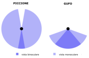 Alcune curiosità sui gufi | Briciolanellatte Weblog