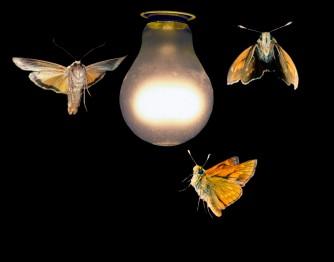 Loving-the-light.