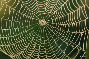 tela di ragno