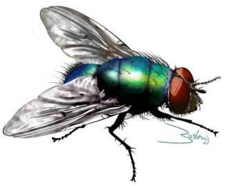 mosca verde